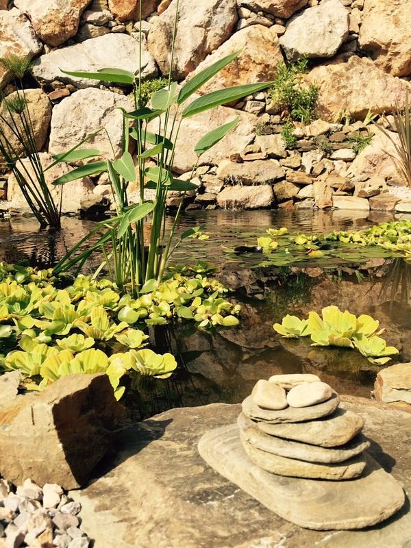 Comment créer un bassin dans son jardin? 7