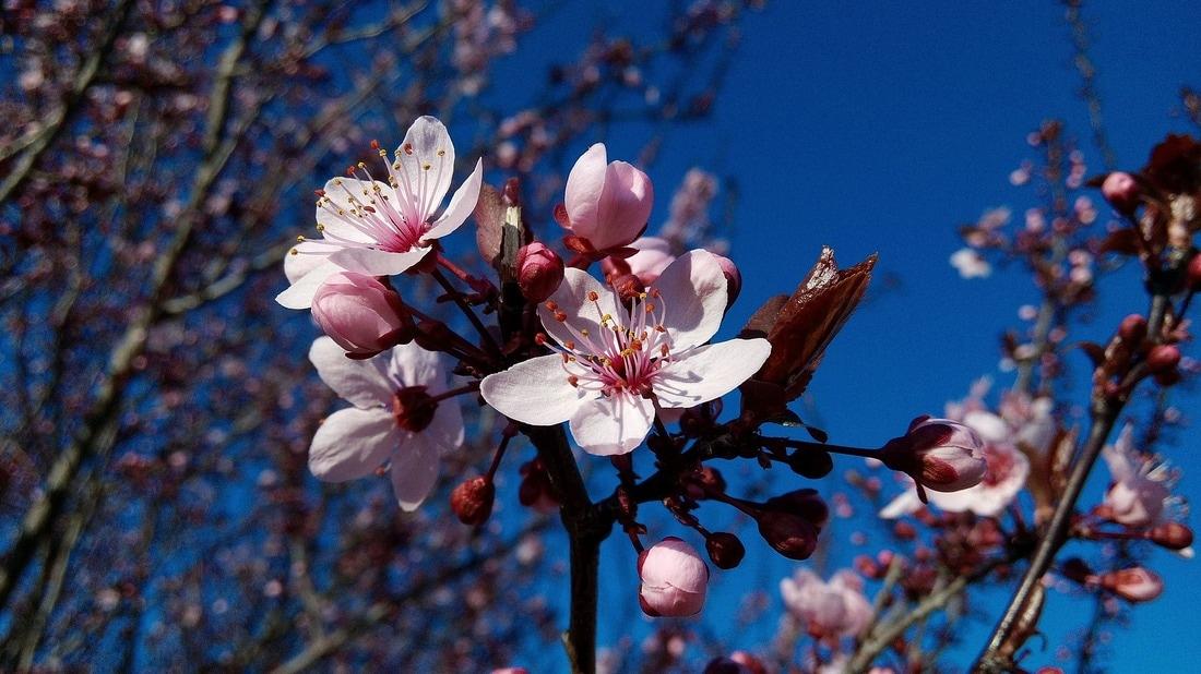 Plus qu'un mois avant le printemps ! 1