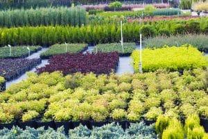 arbustes de couleurs dans jardinerie