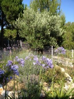 Jardins mediterranéens 13